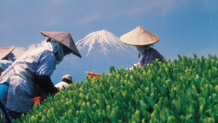 Japan Grün Tee