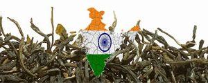 Grüntee Indien