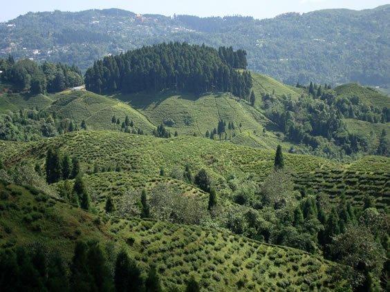 Blick auf die Plantage Okayti
