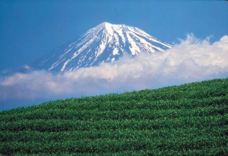 Eine Tasse japanischer Vitalität