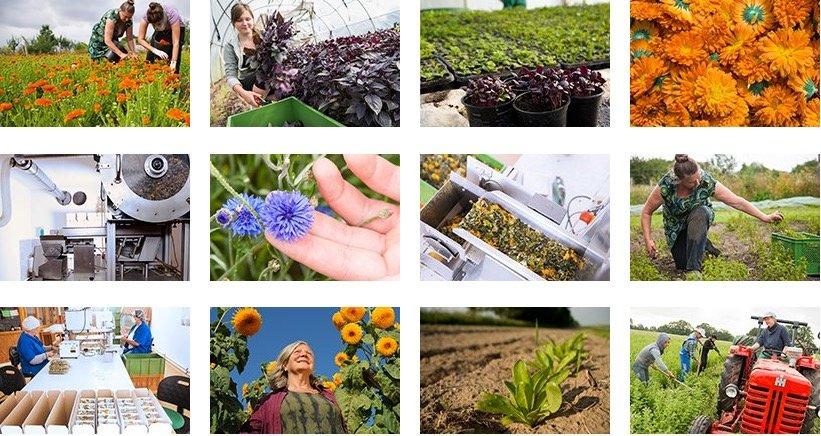 Kräutergarten Pommerland Bio Kräutertee