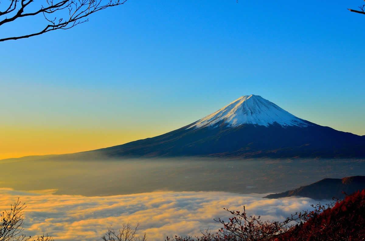 Japanische Grüntees beim Teeblätter-Versand